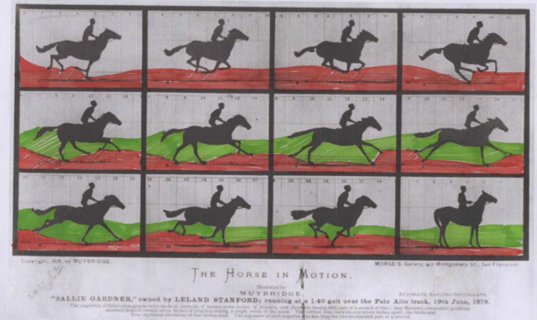 Paula Sotomayor / Estudio del caballo - Casiopea