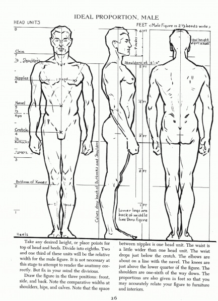 Archivo:AndrewLoomis-Male-Proportions-01.jpg