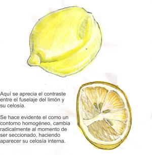 Limon1.png