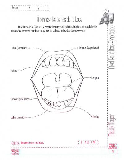 Titulo 1: Co-diseño de Material Didáctico para Trastornos ...